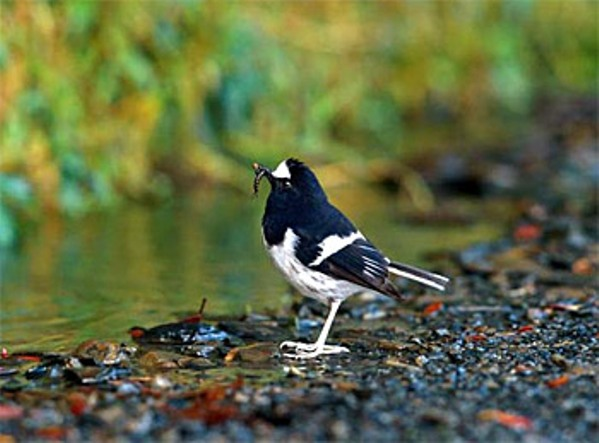 Binsar India  City pictures : ... never seen that bird before. This is Binsar's Wildlife sanctuary